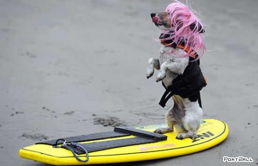 Собаки - серферы.