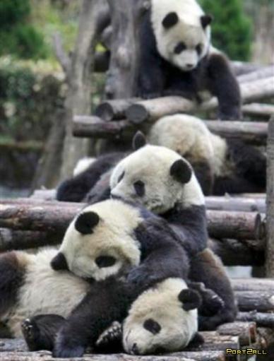 Позитивные фото спящих или просто сонных животных!