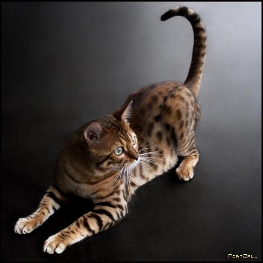 Подборка фотографий котов.