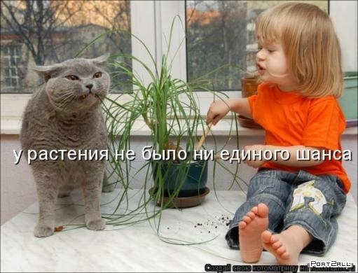 Подборка свежих котоматриц