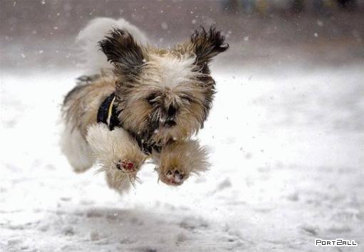 Прикольные фото собак. Собакоматрицы =)