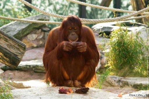 Мего позитивные фото животных =)