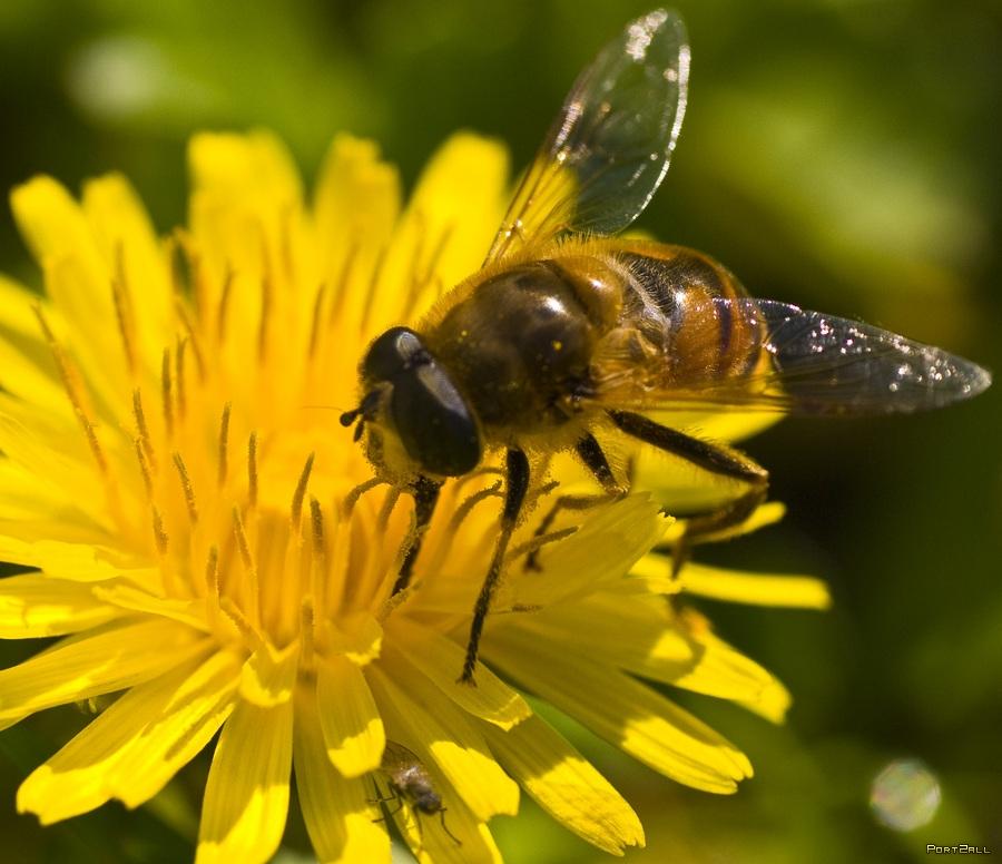 Фото пчел для детей