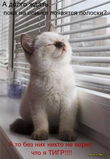 Уматовые фото кошек с подписями. Гоневные котоматрицы.