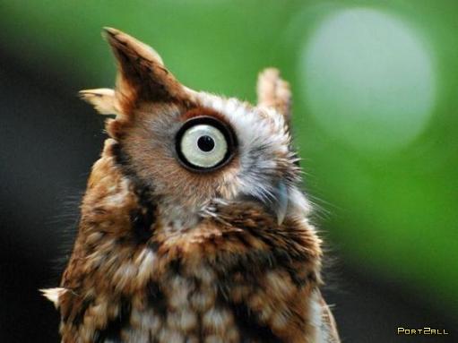 Совы. Фото сов. Забавные совёнки :D