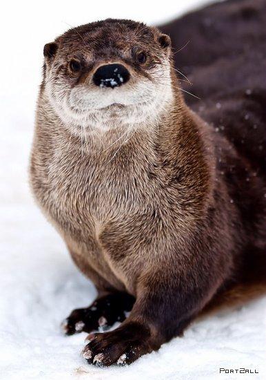 36 лучших фотографий животных | Лучшие фото животных