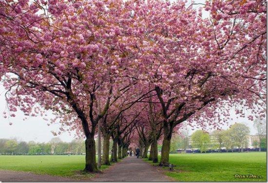 Весна 2011. Весенний фотоотчет!)