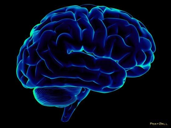 20 отличий женского мозга от мужского