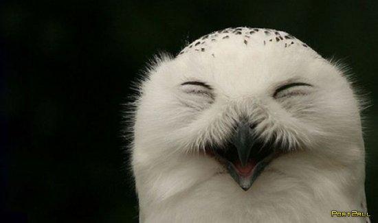 Смеющиеся совы. Веселые фото сов. #Совофото