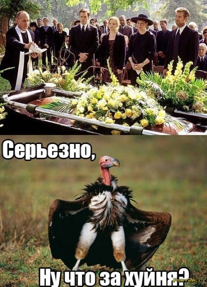 Подборка приколов из Twitter #twiprikol №34