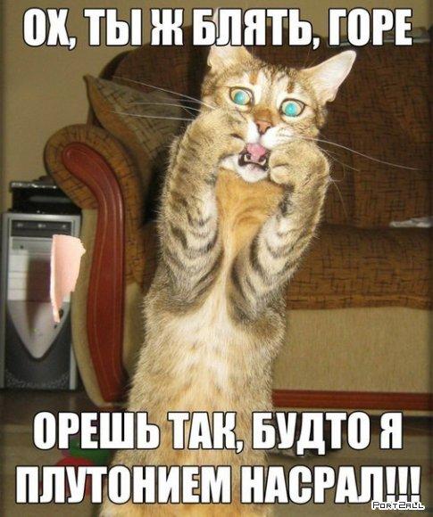 Подборка приколов из Twitter #twiprikol №35
