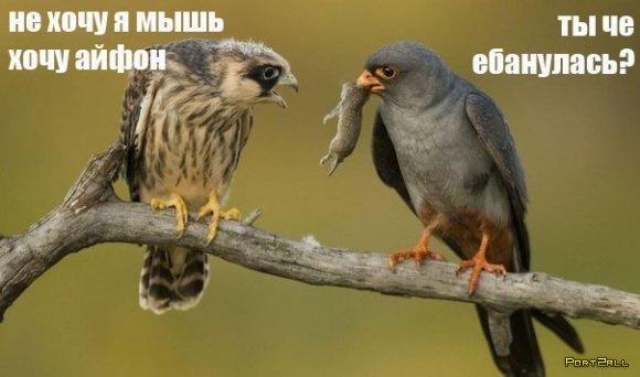 Подборка приколов из Twitter #twiprikol №54