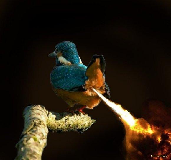 Фотожабы на гадящую птичку :)