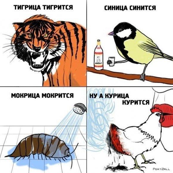 Подборка приколов из Twitter #twiprikol №66