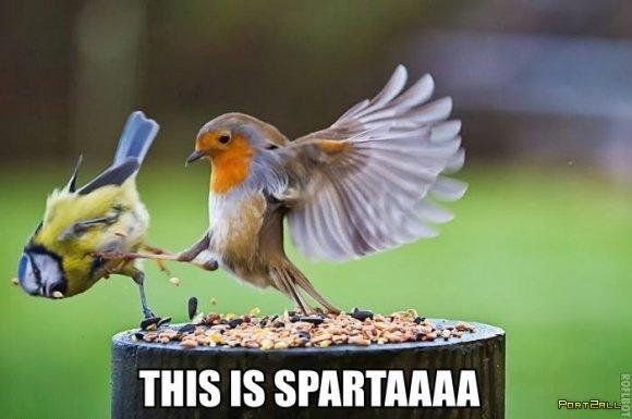 Подборка приколов из Twitter #twiprikol №77 [С днём святого...]